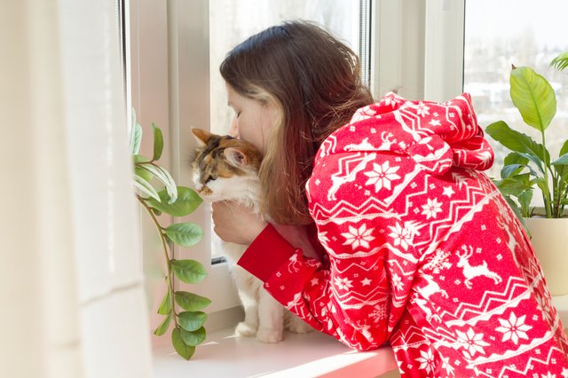 Are Cats Good for Human Health? Here Are the Proven Benefits of Having a Cat