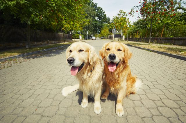 Can Dogs Recognize Their Own Breed?