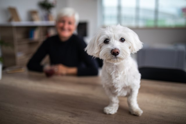 How to Help a Dog With Dementia?