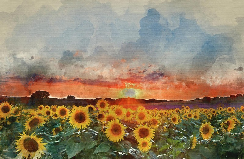 Sunflower Summer Sunset By Matthew Gibson, Watercolor Painting