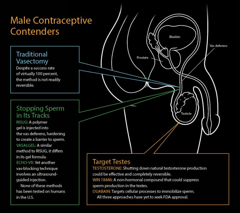 Male Contraceptive Compound Stops Sperm Without Affecting Hormones