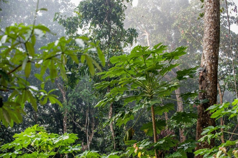 Rainforest Vine Compound Kills Resilient Cancer Cells
