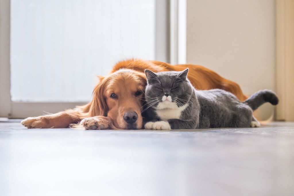 Can Dogs Be Allergic to Cats?