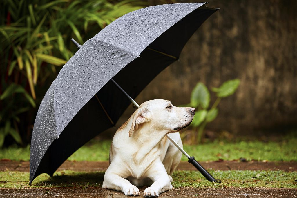 How to Help a Dog Who is Scared of Thunder