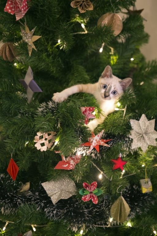 Why Does My Cat Knock Ornaments Off The Christmas Tree?